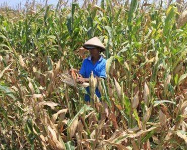 Peran BKPM Dalam Kemajuan Usaha Pertanian di Indonesia
