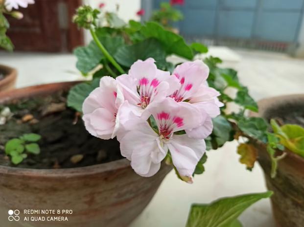 Akan Rilis di Indonesia, Begini Hasil Jepretan Kamera Makro Redmi Note 8 hasil kamera